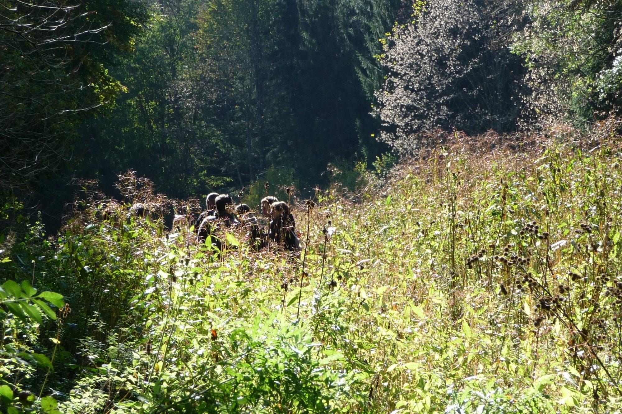 5_e15 im Wald